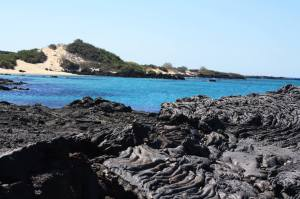 Stroll along the lava-covered beach at Sullivan Bay!