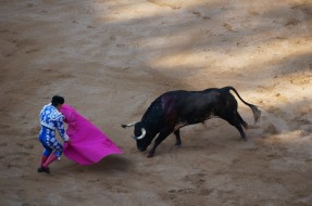 Option to watch a bull fight